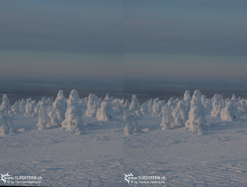 2012-02-03 - Frozen trees on Levi Hill, Finnaland 3D 3