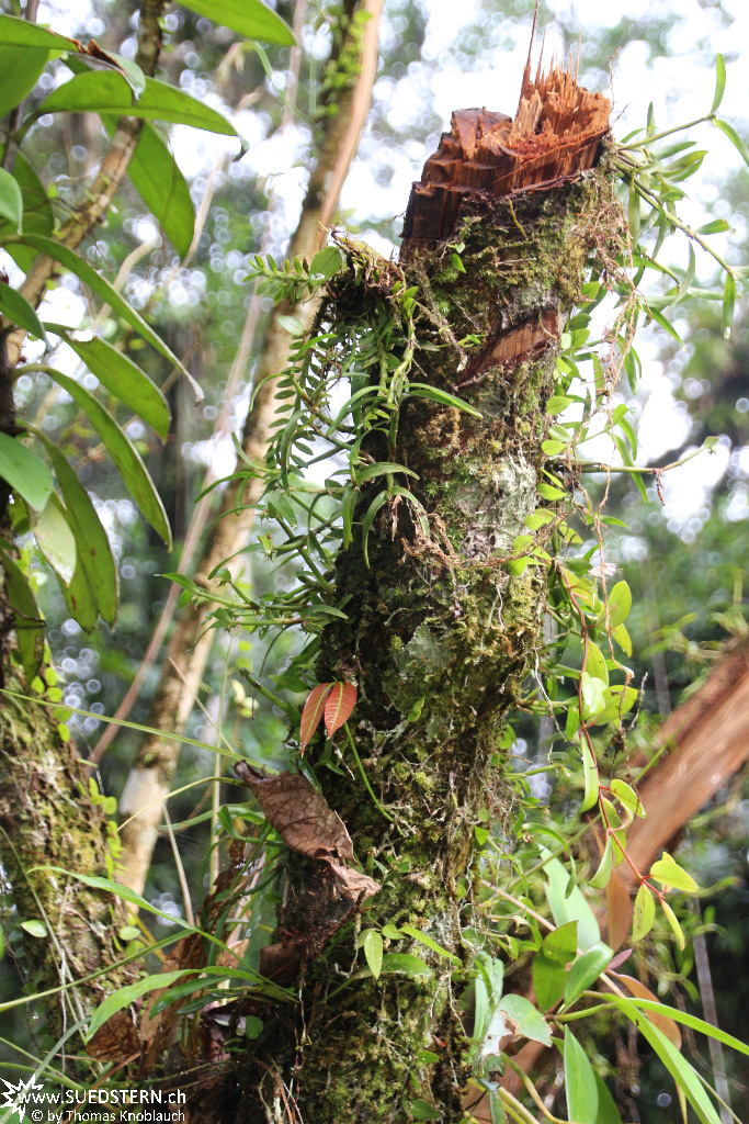 Cuyabeno (Ecuador) - Trunc with plants - IMG 5761