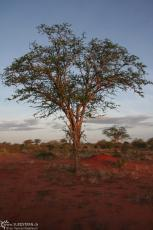 IMG 7593-Kenya, dawn at Tsavo East