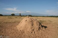 IMG 7833-Kenya, small ant hill in fromt of high Kilimanjaro seen in Kimana Reserve