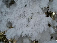 Ice crystalls on fir